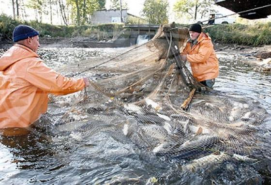 рыбная ловля хозяйство
