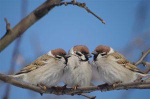 Жители Новосибирска открывают приют для птиц