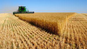 В Новосибирске обсудят сложности с реализацией урожая