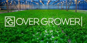 В Новосибирске предлагают автоматизировать салатные фермы
