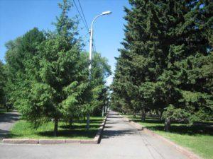 Новосибирскую аллею вымостят плиткой