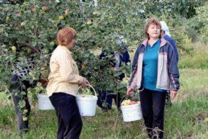 Новосибирских садоводов поддержат на региональном уровне