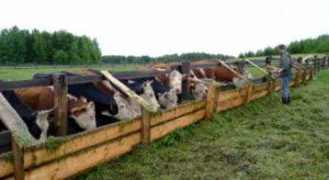 В Новосибирской области открывается центр поддержки фермерства