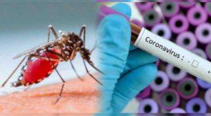Новосибирский учёный рассказал, что комары не переносят коронавирус
