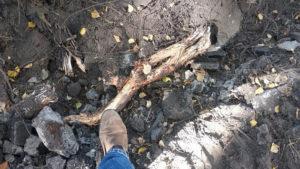 Полувековые деревья повредили в Новосибирске