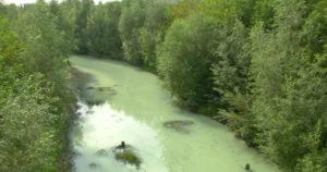 Новосибирские власти нашли виновных в загрязнении реки Тулы