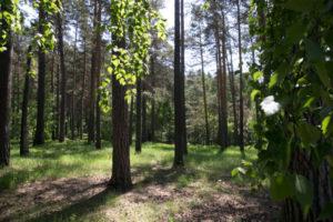 В Новосибирской области пока не будут создавать новые ООПТ
